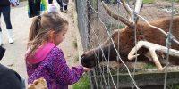 afmr-Zoo falardeau
